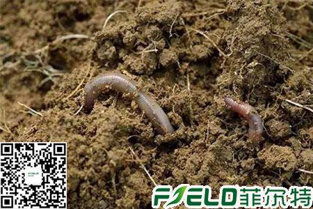 水溶性肥料的优缺点