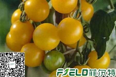 西红柿水溶肥多久用一次怎么用